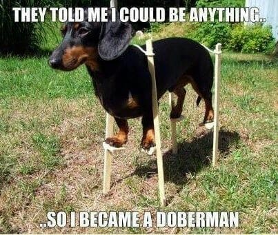 Weiner Dog Meme - They told me that I couold be anything... So I became a doberman