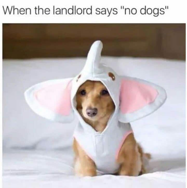 Weiner Dog Meme - When the landlord says 'no dogs'