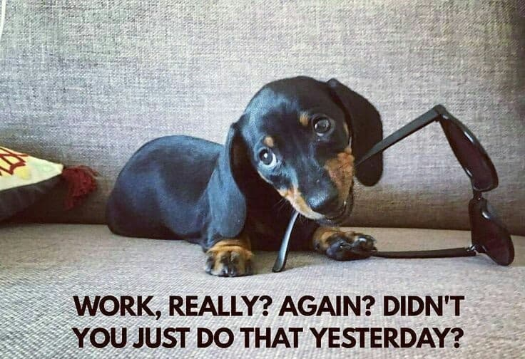 Weiner Dog Meme - Work, really. again. didn't you just do that yesterday