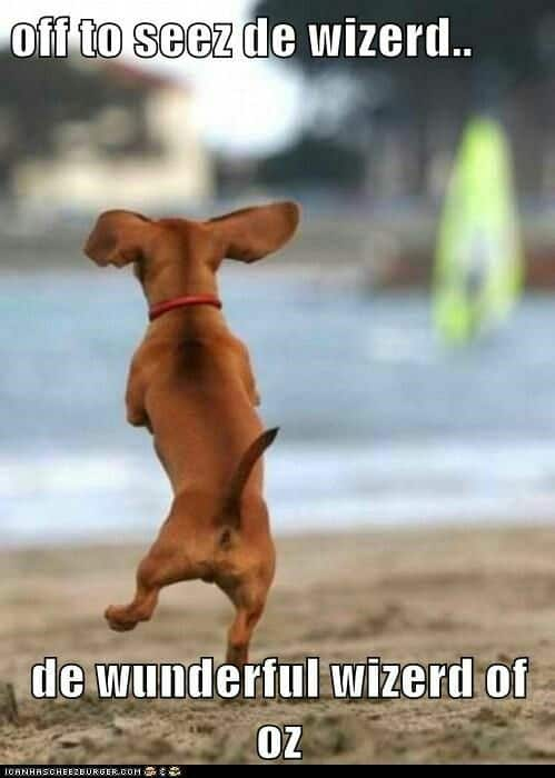 Weiner Dog Meme - off to seez de wizerd.. de wuderful wizerd of oz