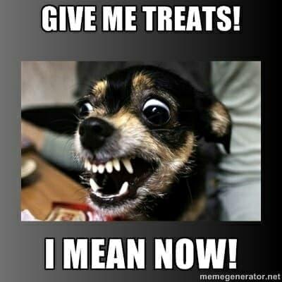 Angry Dog Meme - Give me treats! I mean now!
