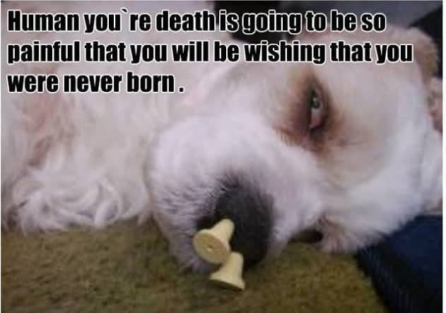 Angry Dog Meme - Human you're death is going to be so painful that you will be wishing that you were never born