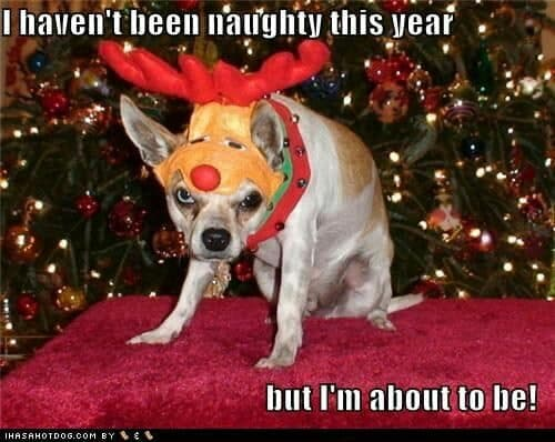 Angry Dog Meme - I haven't been naughty this year but I'm about to be!
