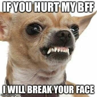 Angry Dog Meme - If you hurt my bff I will break your face