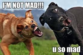Angry Dog Meme - I'm not mad!!! u so mad