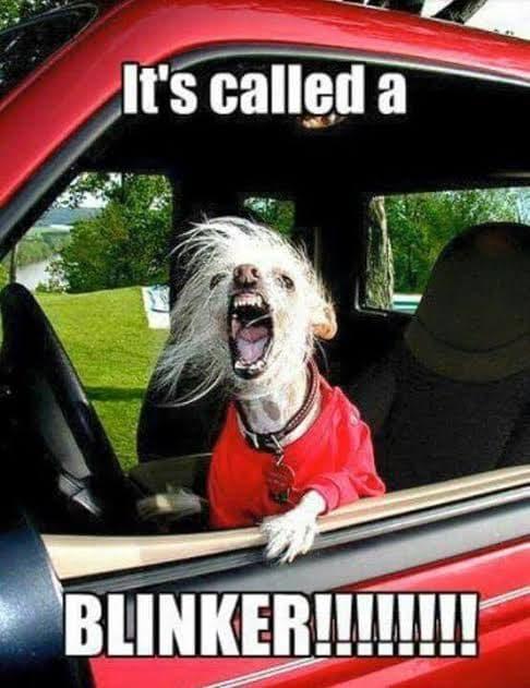 Angry Dog Meme - It's called a blinker!!!!!!
