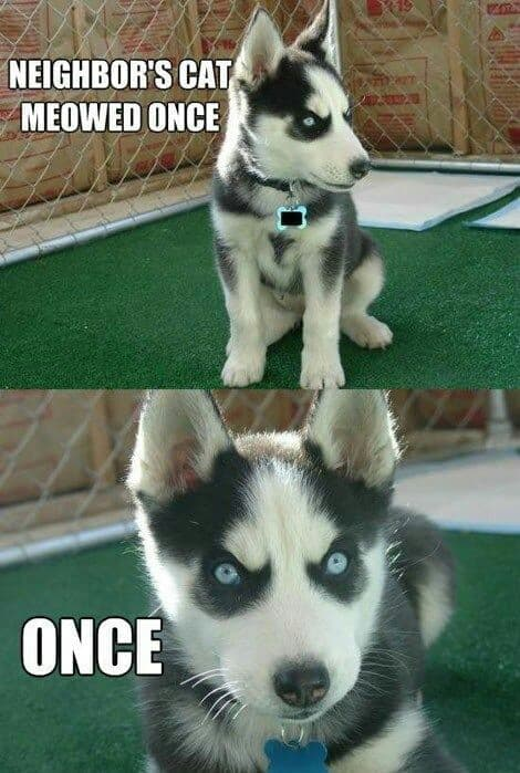 Angry Dog Meme - Neighbor's cat meowed once. once