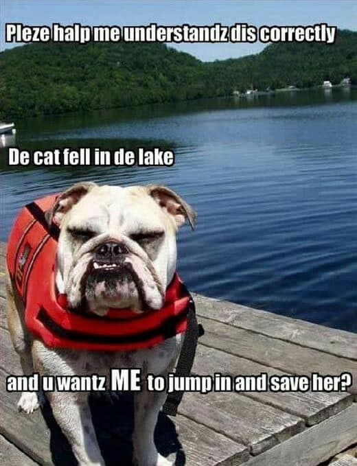 Angry Dog Meme - Pleze halp me understandz dis correctly de cat fell in de lake an u wantz me to jump in an save her