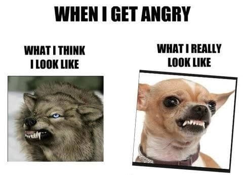 Angry Dog Meme - When I get angry. What I think I look like, What I really look like