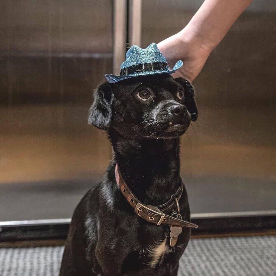 Cocker Spaniel Greyhound Mix
