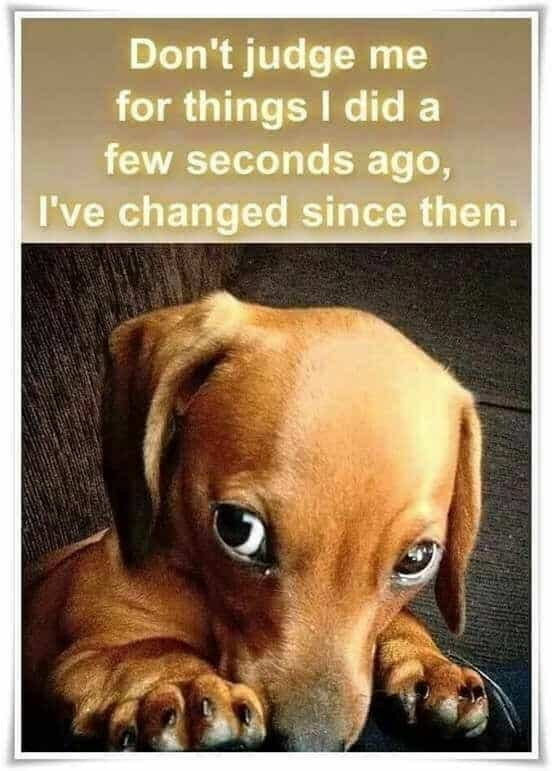 Weiner Dog Meme - Don't judge me for things I did a few seconds ago, Ive changed since then.