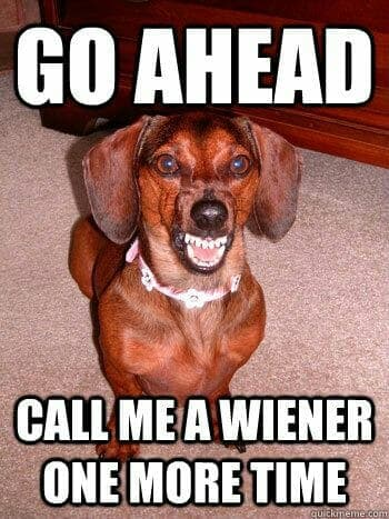 Weiner Dog Meme - Go ahead call me a wiener one more time