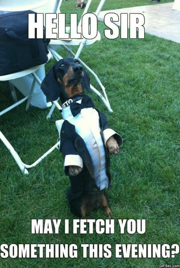 Weiner Dog Meme - Hello Sir may I fetch you something this evening
