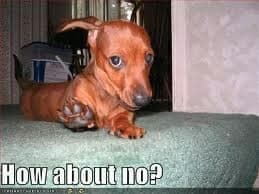 Weiner Dog Meme - How about no