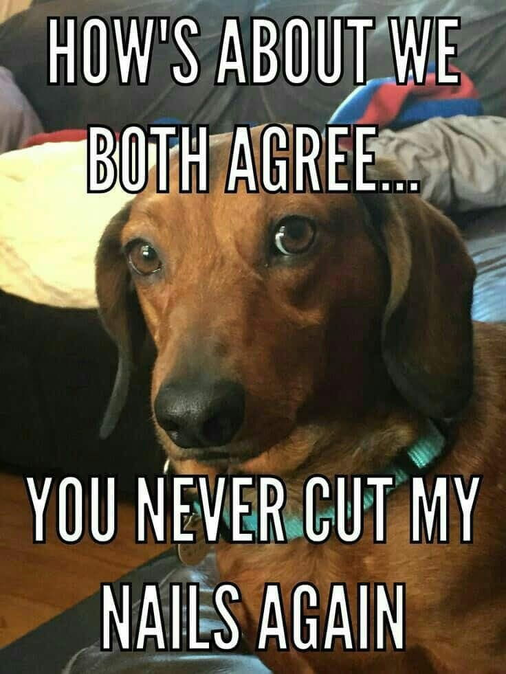 Weiner Dog Meme - How's about we both agree... You never cut my nails again