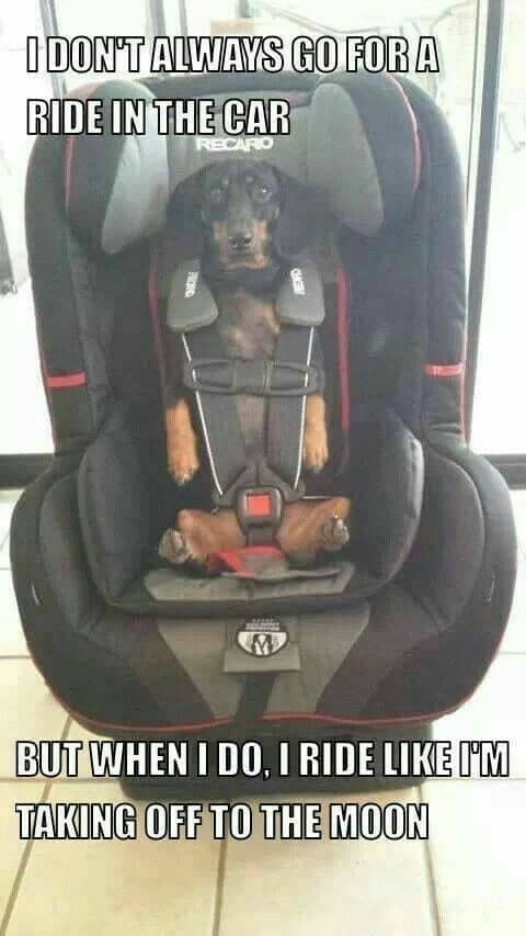 Weiner Dog Meme - I don't always go for a ride in the car but when I do I ride like I'm taking off to the moon