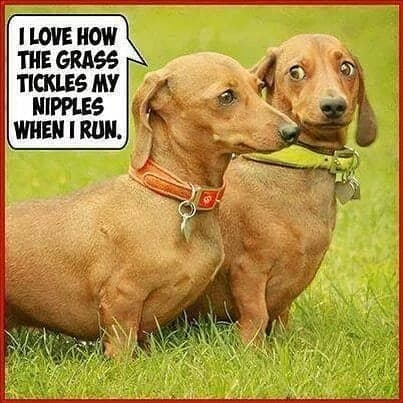 Weiner Dog Meme - I thought there would be bacon in here