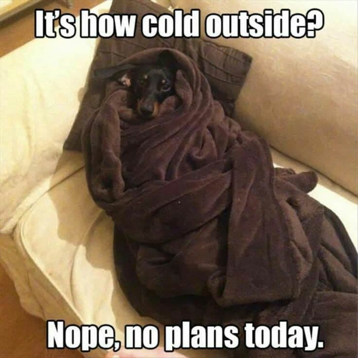 Weiner Dog Meme - It's how cold outside. Nope, no plans today.