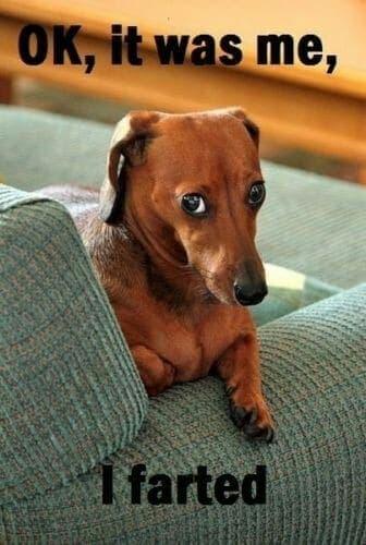 Weiner Dog Meme - Ok, Iit was me, I farted