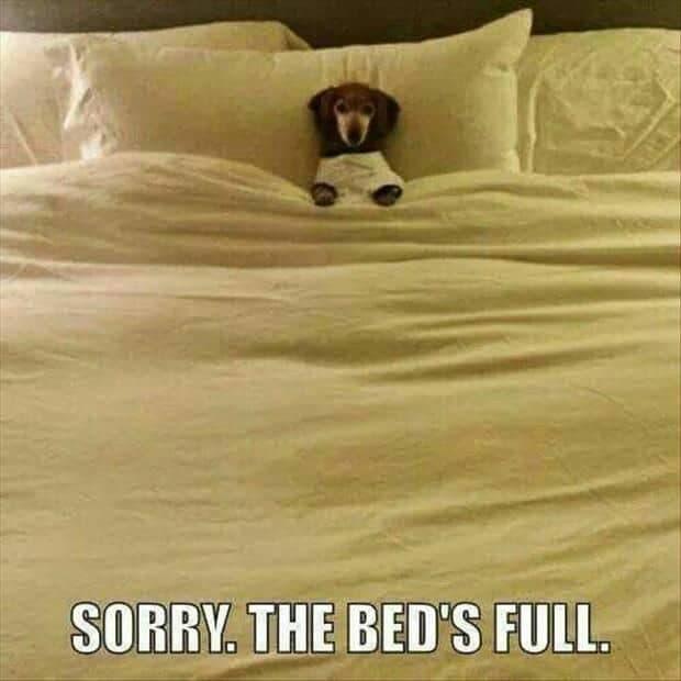 Weiner Dog Meme - Sorry. The bed's full.