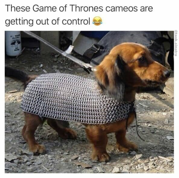 Weiner Dog Meme - These Game of Thrones cameos are getting out of control