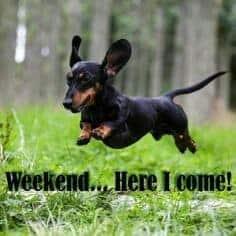 Weiner Dog Meme - Weekend... Here I come!