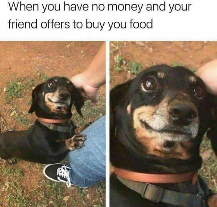 Weiner Dog Meme - When you have no money and your friend offers to buy you food