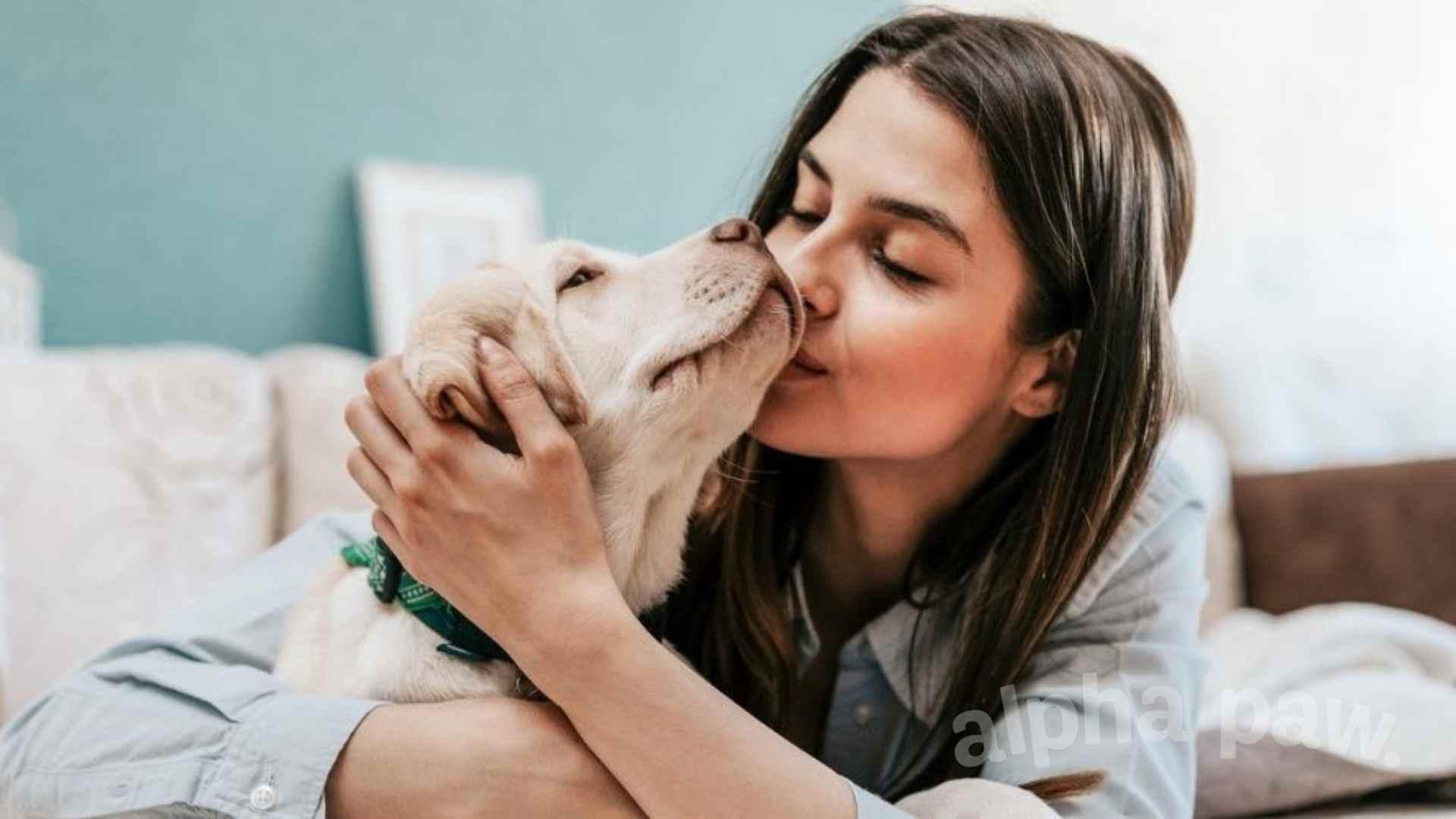 Pet Parenting FAQs: Our Vet Answers the Most Common Questions on Pet Parents' Minds