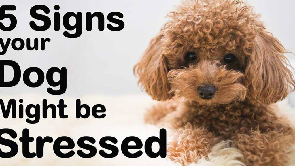 5 Signs Your Dog Might be Stressed