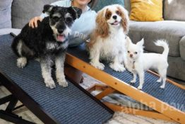 Top 5 Reasons You Need a Dog Ramp for Your Fur Family
