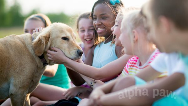 10 Ways Children Can Help with Pets