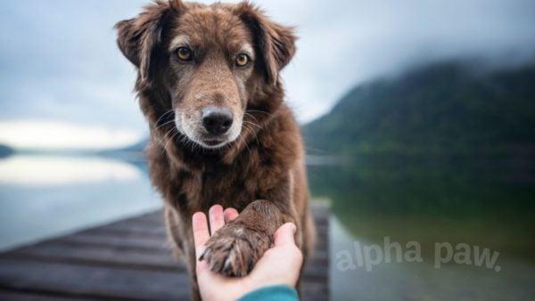 How Do Dogs Help Us Live Longer?