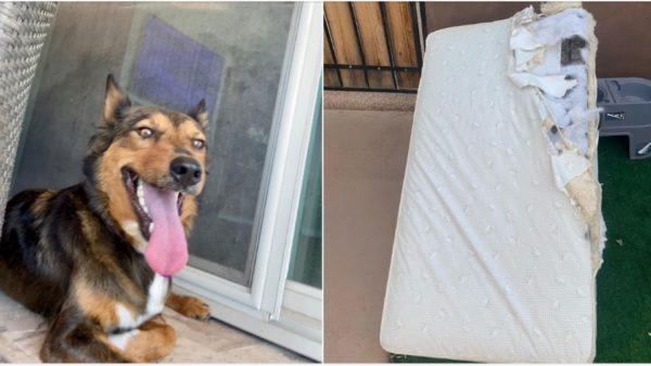 image credit: Sunshine Dog Rescue
