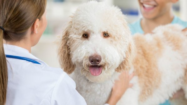 Preventive Care and Wellness Guidelines for Dogs