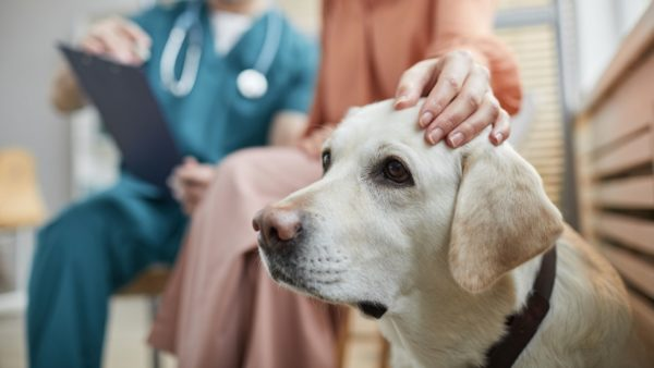 Periodontal Disease In Dogs: Warning Signs, Treatment and Prevention