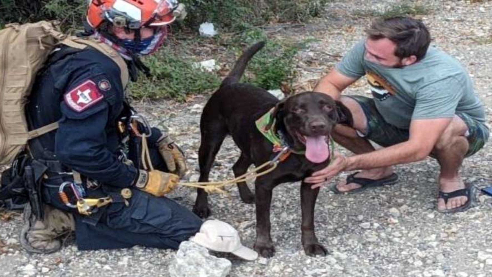 An Amazing Animal Story: A Dog Survives A 70 Foot Fall, Saved By A Miracle!