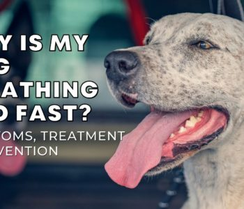 Why Is My Dog Breathing Too Fast? Symptoms, Treatment, and Prevention