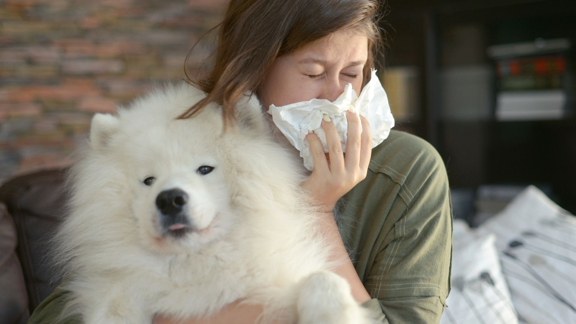 Dog Allergies: Symptoms and Remedies