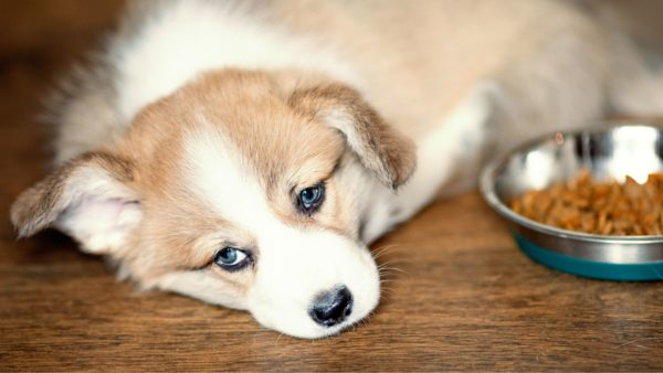 Dog Dental Disease: This Can Happens If You Neglect Your Puppy's Teeth!