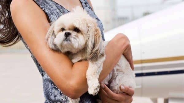 How to Help A Choking Dog: Life-Saving Tips For Pet Parents