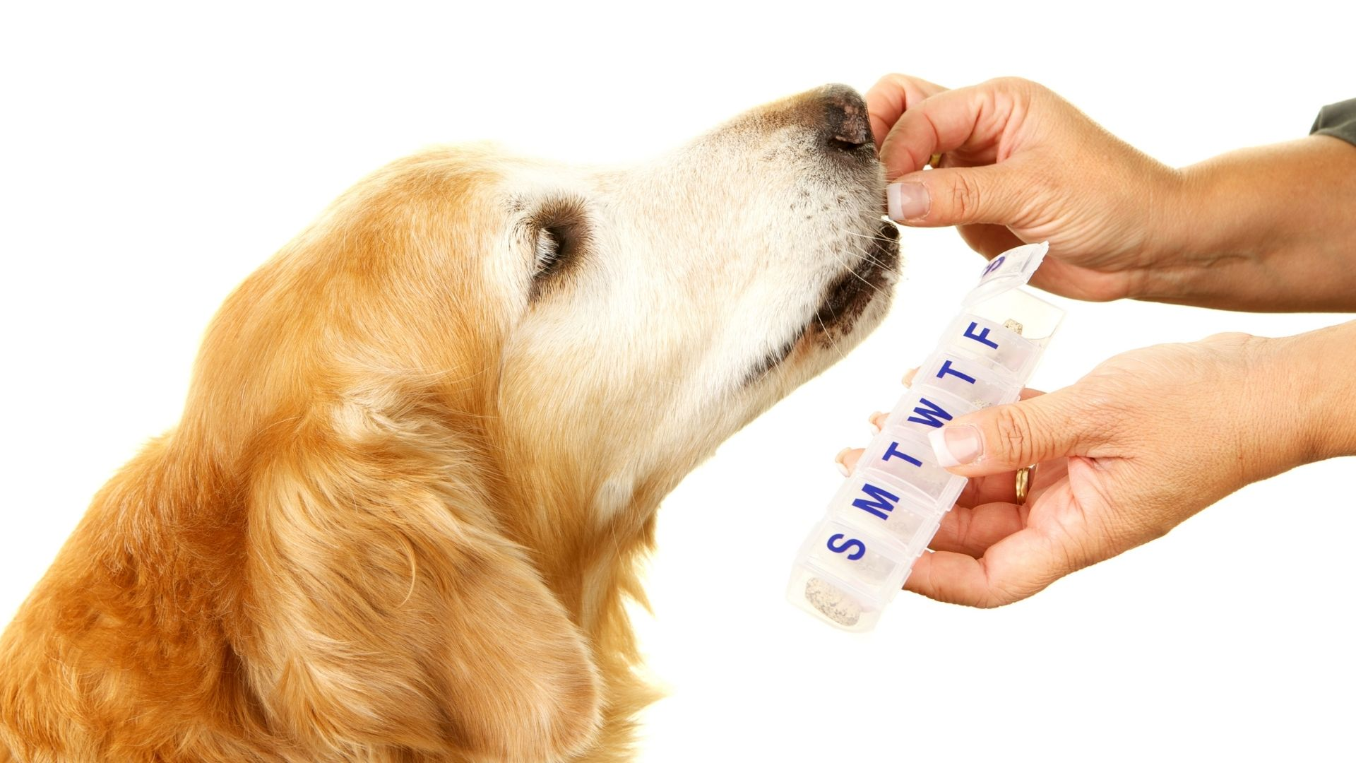 Amoxicillin for Dogs: Uses, Dosage and Side Effects