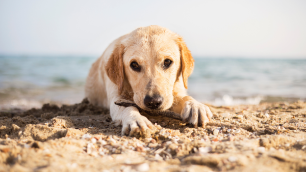 How to Care for A Dog At the Beach: A Pet Parent Guide