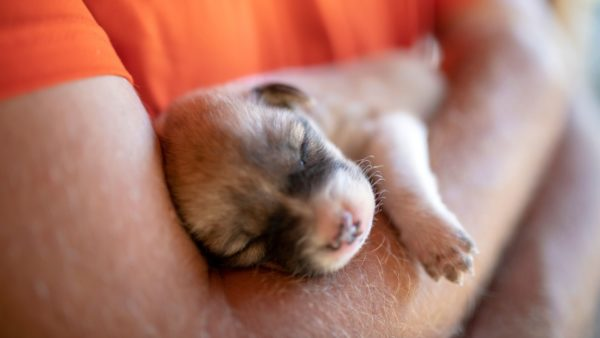 Down Syndrome In Dogs: A Pet Parent Guide