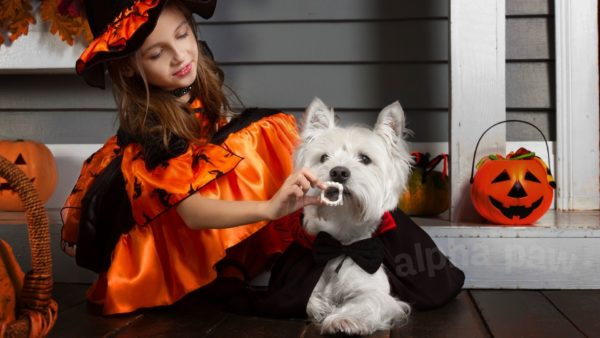 Have A Howling Good Time With Your Pup This Halloween!
