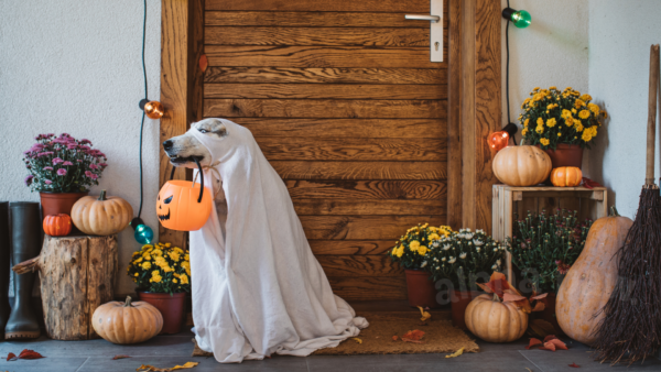 Have A Blast With Your Pup On Halloween