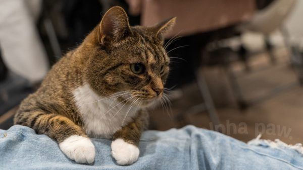 The Most Common Cat Diseases